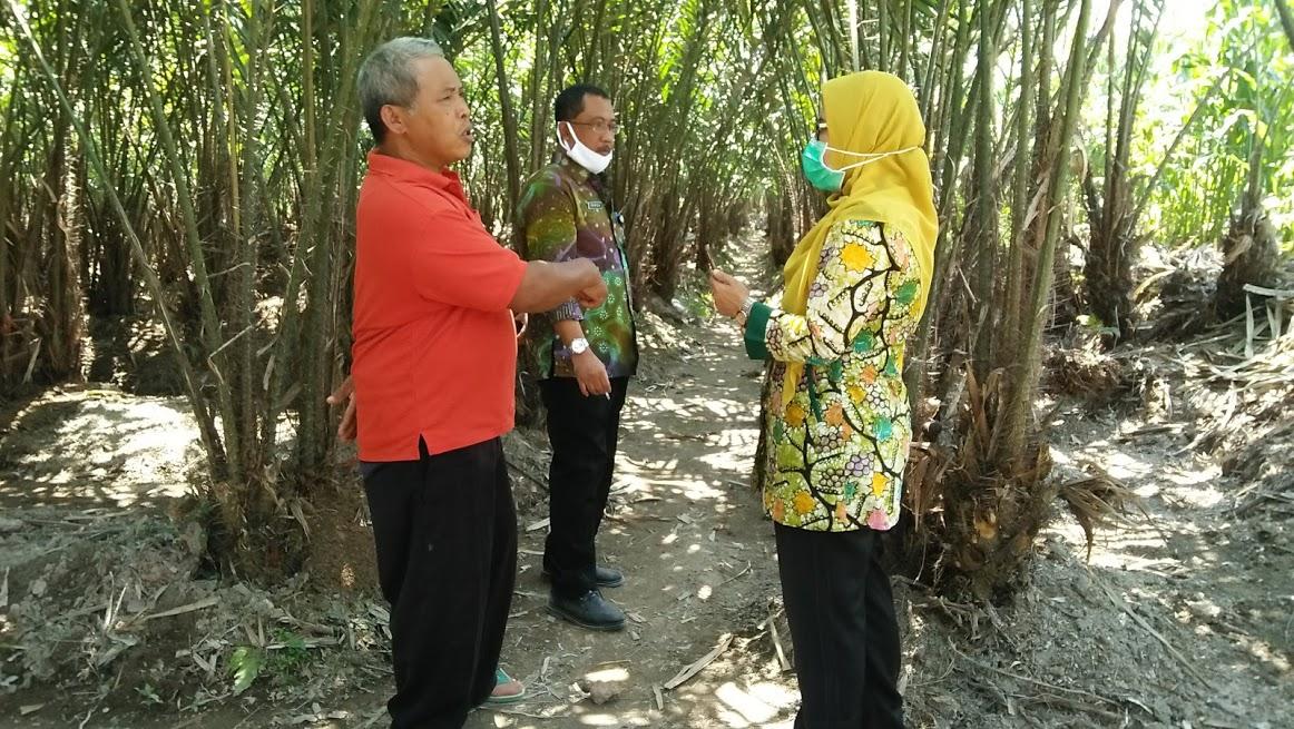 Image : Kunjungan Kerja Kepala Dinas Pertanian Dan Ketahanan Pangan Kab. Magelang, Menggali Potensi Dsa di Desa Banyuadem